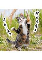おどるネコうたうネコ