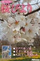 遊々さんぽ 「桜びより」