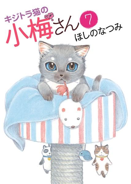 キジトラ猫の小梅さん 7