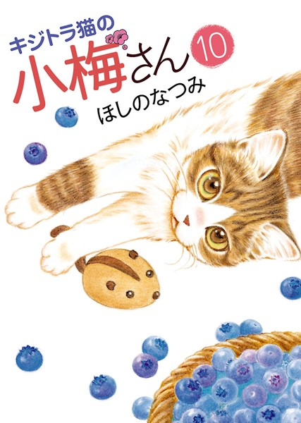 キジトラ猫の小梅さん 10
