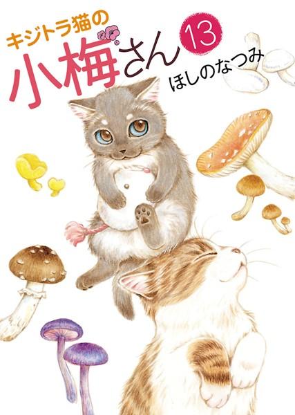 キジトラ猫の小梅さん 13