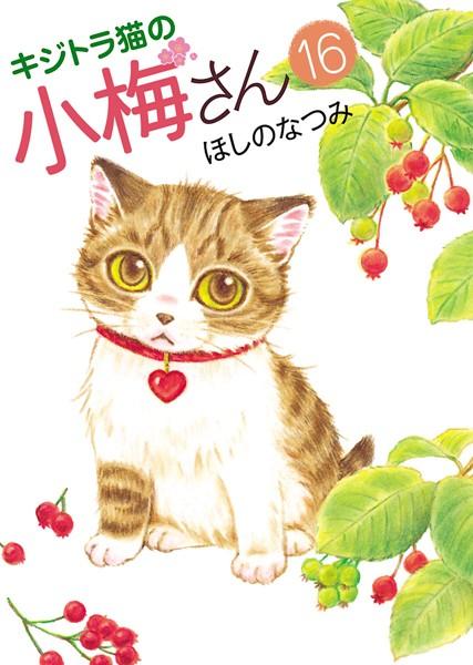 キジトラ猫の小梅さん 16