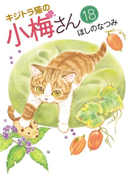 キジトラ猫の小梅さん 18