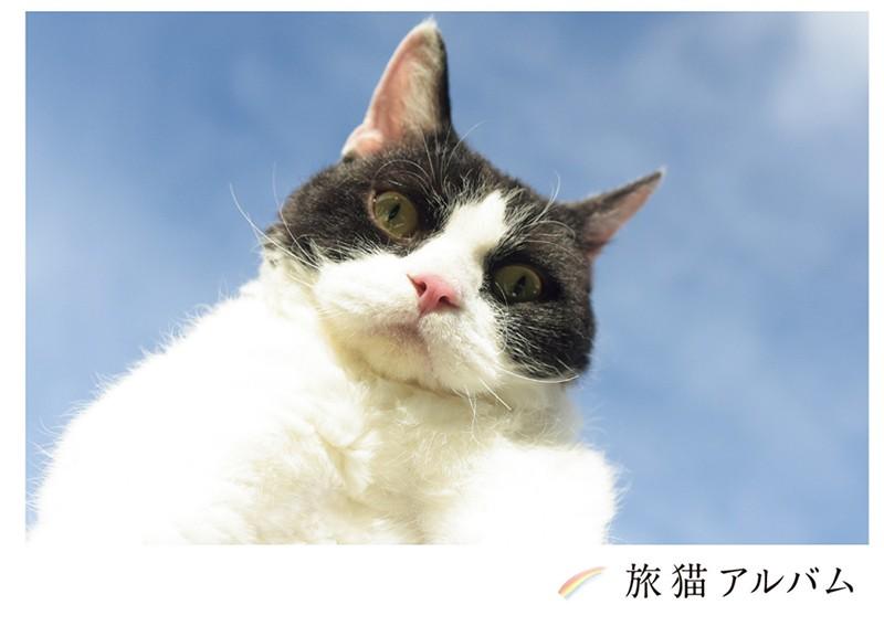 旅猫アルバム