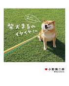 柴犬まるのイヤイヤさん