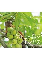 クルミの森のニホンリス(小学館の図鑑NEOの科学絵本)