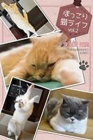 ほっこり猫ライフ vol.2