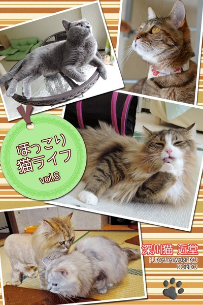 ほっこり猫ライフ vol.8