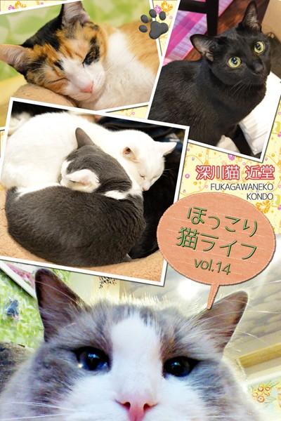 ほっこり猫ライフ vol.14