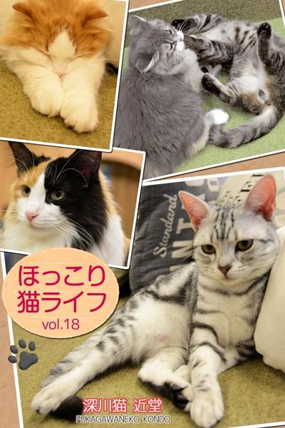 ほっこり猫ライフ vol.18