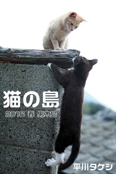 猫の島 2016 春 男木島