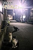 菊池茂夫の「そとねこ」 vol.6