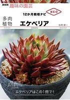 多肉植物 エケべリア