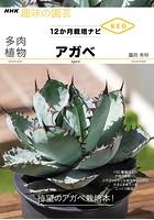 多肉植物 アガベ
