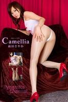 Camellia / 蜑咲伐縺輔d縺�