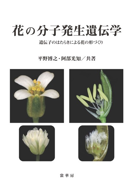花の分子発生遺伝学 遺伝子のはたらきによる花の形づくり