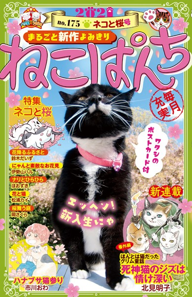 ねこぱんち No.175 ネコと桜号