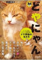 どやにゃん。ドヤ顔猫の生き方